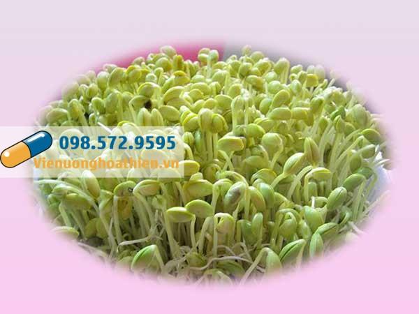 Đậu tương - thành phần có trong Viên Uống Hoa Thiên